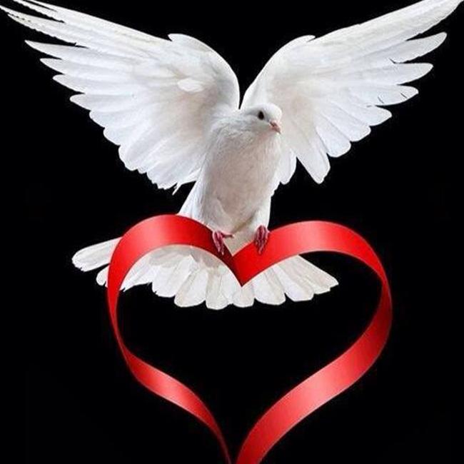 paloma de paz