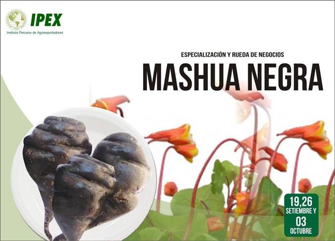 mashua negra-1