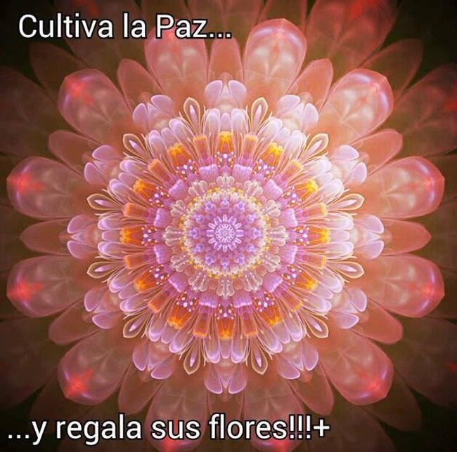 cultiva-la-paz-6