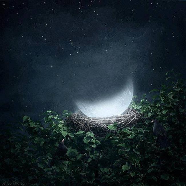 luna-en-nido-1
