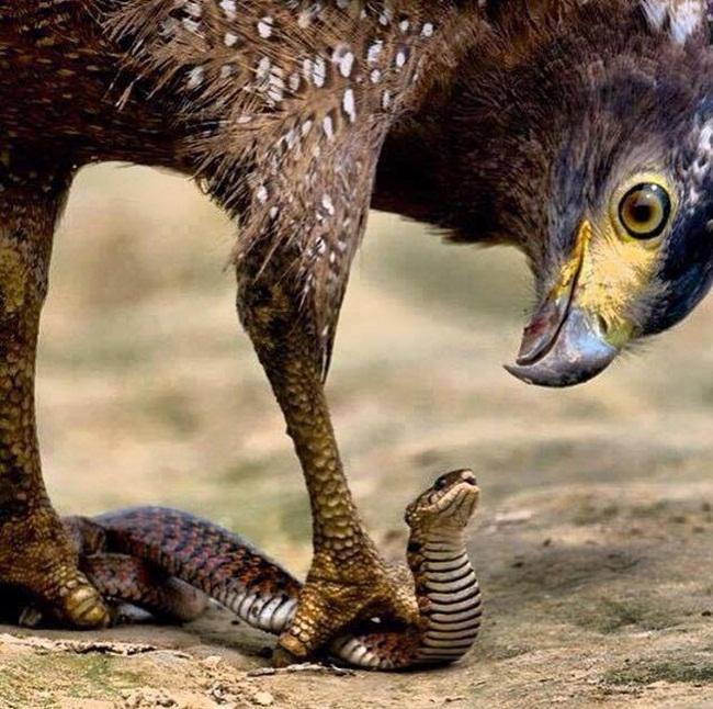 aguila-y-serpiente-3