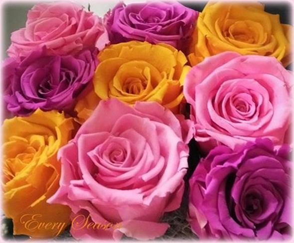 rosas-de-colores-5