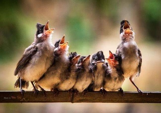 coro-de-angelitos