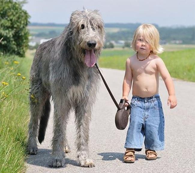 perro-grande-y-nino