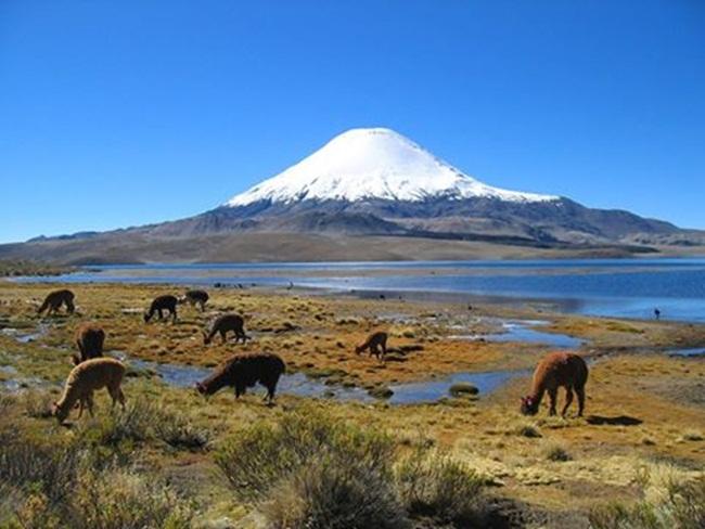 volcan-parinacotacerc-a-a-arica